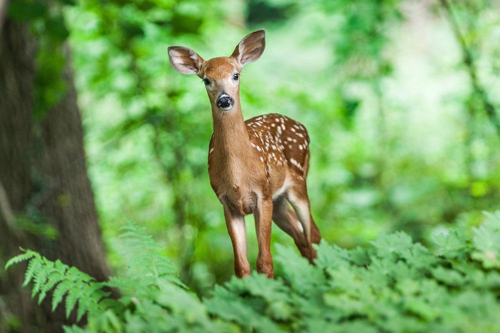 Myślistwo to umiłowanie przyrody - Arkadiusz Zdebel