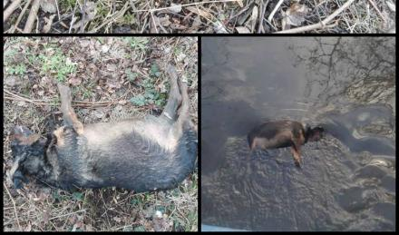 Zabrze: Martwy pies w Bytomce. Jest podejrzenie popełnienia przestępstwa