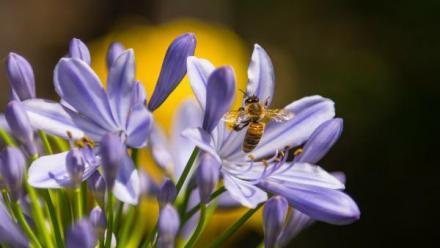 Dzień Pszczół w Miejskim Ogrodzie Botanicznym